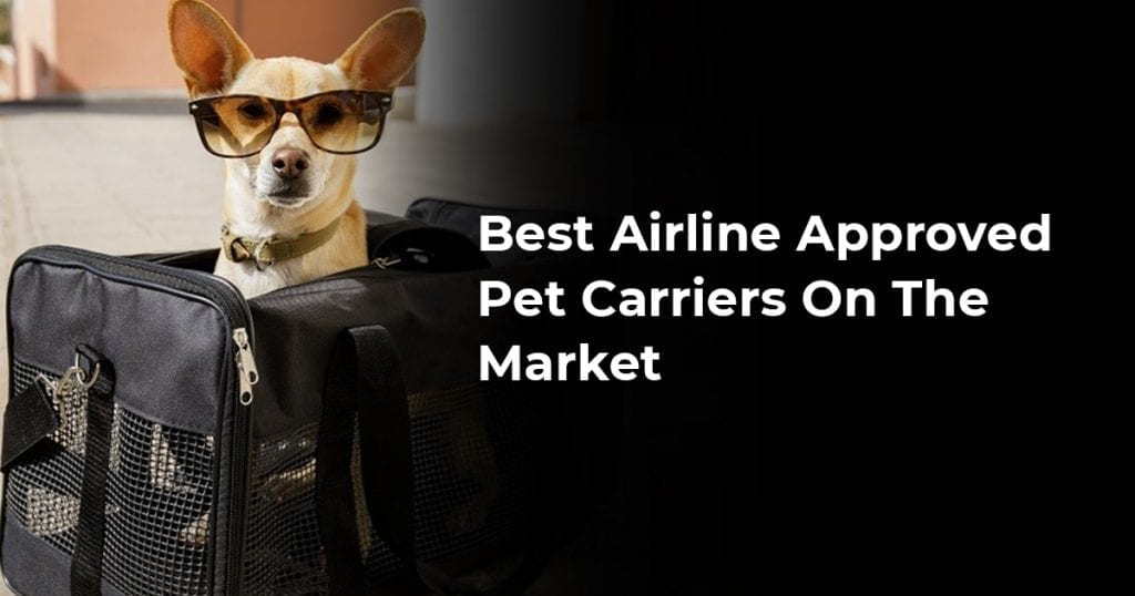 Best Airline Approved Pet Carriers On The Market