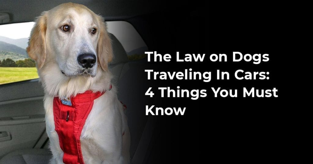 The Law on Dogs Traveling In Cars: 4 Things You Must Know
