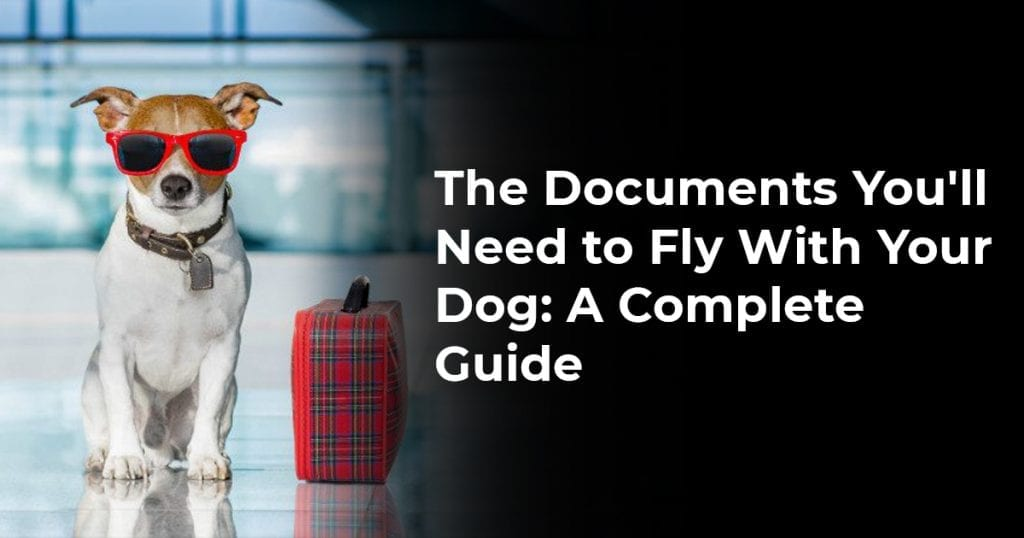 The Documents You'll Need to Fly With Your Dog: A Complete Guide